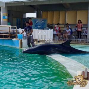 thekumachan_okinawa_aquarium-41