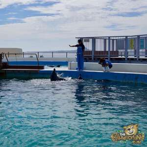 thekumachan_okinawa_aquarium-42